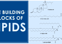 What are the building blocks of Lipids?