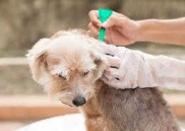 What are the importance of deworming to dogs?