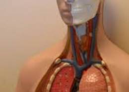 Are there DIY respiratory therapy treatments ?