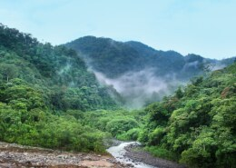 What Does The Climate Of A Tropical Rainforest Feel Like?
