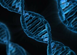 What Are Alleles?
