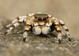 What Is The Economic Importance Of Arachnids – (Stated In Article)