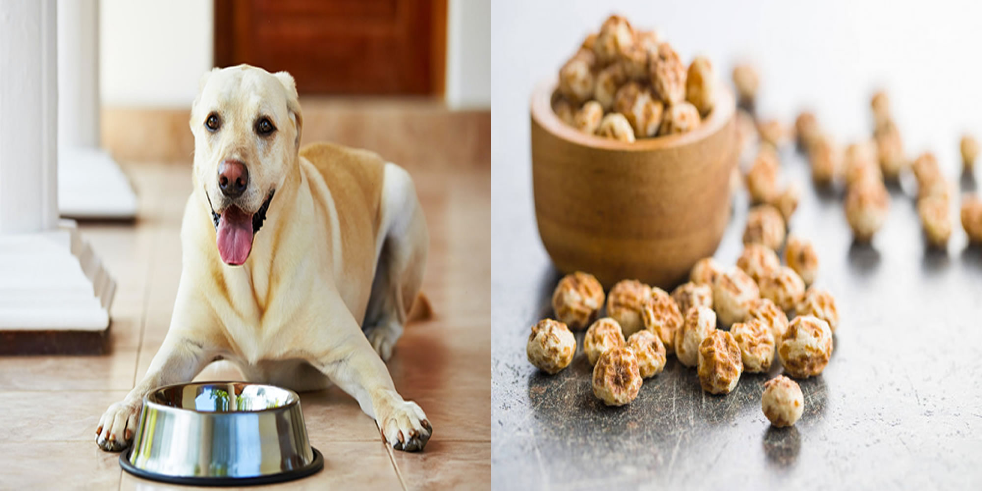 Are Tiger Nuts Safe For Dogs?