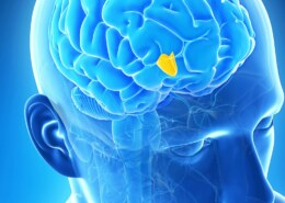 Can The Endocrine System Maintain Homeostasis?