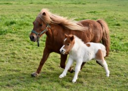 Fascinating Difference Between Foal And Pony – Foal vs Pony