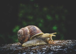 Can Snails Change Shells? – Pinpoint Facts About Snail