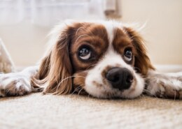 What Is Postpartum Depression In Dogs?
